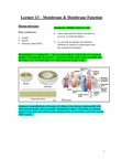Membrane & Membrane Function.docx