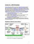 Biology 2382B Lecture Notes - Rapgef3, Priapism, Vasodilation