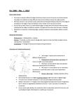Kinesiology 1080A/B Lecture Notes - Visual Cortex, Blurry, Parietal Lobe