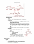 CLAS 203 Study Guide - Final Guide: Fundamental Interaction, Hereditary Monarchy, Syntactic Ambiguity