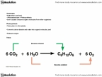 BIOL 1500 Lecture Notes - Light-Independent Reactions, Light-Dependent Reactions, Thylakoid