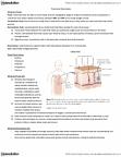 NUTR 1010 Lecture Notes - Extracellular Fluid, Fluid Compartments, Potassium Chloride