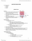 KINESIOL 1A03 Study Guide - Final Guide: Globulin, Central Canal, Coracoclavicular Ligament