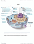 KINE 2011 Chapter Notes - Chapter 2: Glycogen, Cytoskeleton, Spindle Apparatus