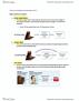 PSYA02H3 Lecture Notes - Lecture 13: Amygdala, Prefrontal Cortex, Limbic System