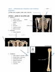 Lab Exam Notes: Lab 3- Appendicular Skeleton and Surface Anatomy
