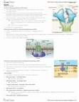 LIFESCI 3B03 Lecture Notes - Glial Cell Line-Derived Neurotrophic Factor, Neurotrophin-3, Platelet-Derived Growth Factor Receptor