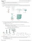 LIFESCI 3B03 Study Guide - Midterm Guide: Ghrelin, Glial Cell Line-Derived Neurotrophic Factor, Polyadenylation
