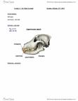 BIOL 1011 Lecture Notes - Lecture 2: Epiglottis, Lysozyme, Trachea