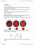 BIOL 1070 Study Guide - Quiz Guide: Cytosol, Transitional Fossil, Glycogen