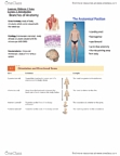 Anatomy and Cell Biology 3319 Study Guide - Midterm Guide: Astrocyte, Whistle Rymes, Capillary