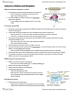 CSB349H1 Lecture Notes - Lecture 5: Small Nuclear Rna, Chromatin Immunoprecipitation, Tata-Binding Protein
