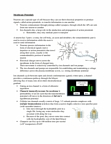 ANAT 262 Lecture Notes - Fluoxetine, Excitatory Synapse, Axon Terminal