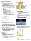 CSB332H1 Lecture Notes - Lecture 15: Synaptic Plasticity, Schaffer Collateral, Biological Neural Network