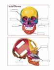 bones review0.pdf