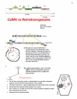 CSB351Y1 Study Guide - Rna Virus, Reverse Transcriptase, Plant Virus