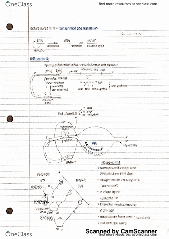 Bio 311c Lecture Notes Fall 2016 Lecture 32 Transfer