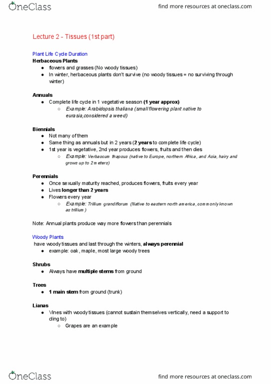 BI226 Lecture Notes - Fall 2016, Lecture 2 - Parenchyma, Stoma