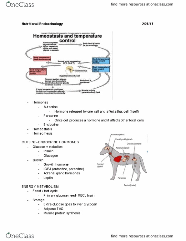 ANSC 1111 Lecture 9: Animal Nutrition Lecture 9 (Nutritional Endocrinology)