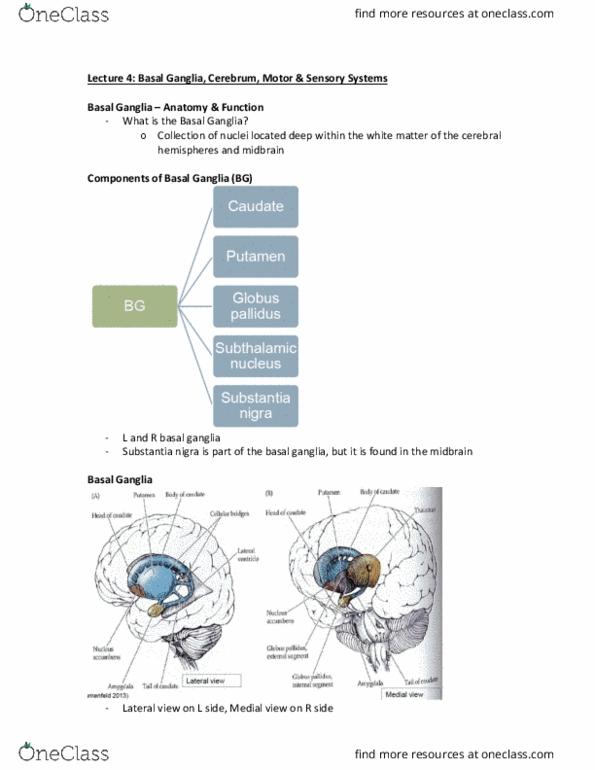 Rehabilitation Sciences 3062A/B Lecture 4: Lecture 4 - OneClass