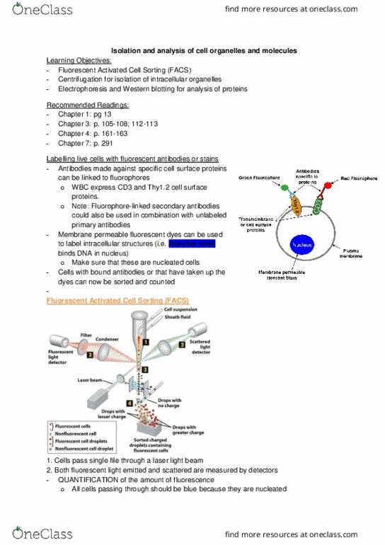 Biology 2382B Study Guide - Final Guide: Apoptosis, Kinesin, Calreticulin