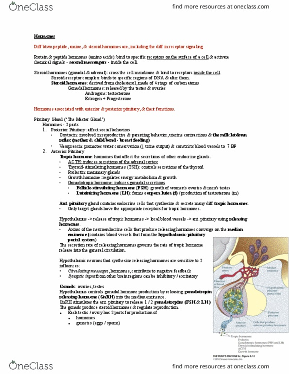 PSY 351 Study Guide - Midterm Guide: Dorsal Root Ganglion, Stretch Reflex,  Primary Motor Cortex
