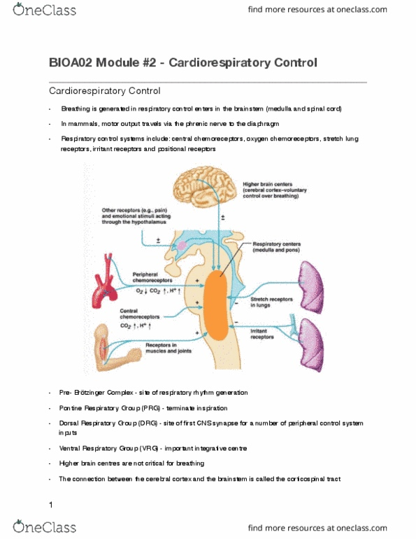BIOA02H3 Study Guide - Winter 2017, Midterm - Red Blood Cell