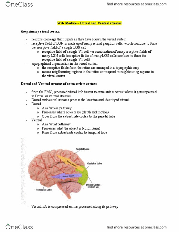 PSYCH 1XX3 Textbook Notes - Spring 2018, Chapter Vision