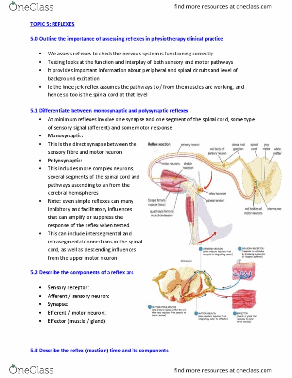 PHTY201 Lecture Notes - Lecture 5: Upper Motor Neuron, Reflex Arc, Spinal  Cord